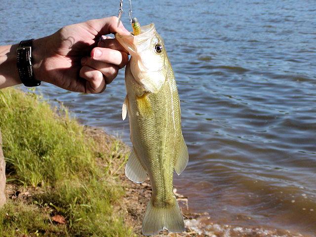 Kentucky Lake, Lake Barkley Bank Fishing Tips